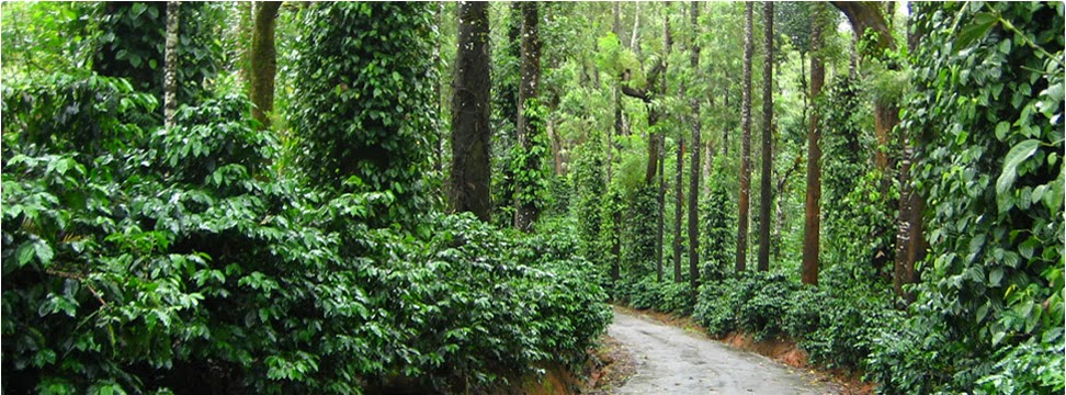 coorg-nature
